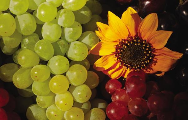 vegetable034.jpg